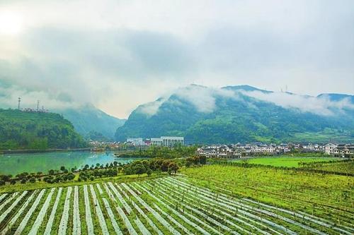 雨后的南天新镇猕猴桃园与飞仙湖相互映衬,美不胜收