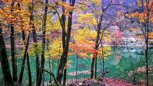 秋意浓 天全喇叭河景区一房难求