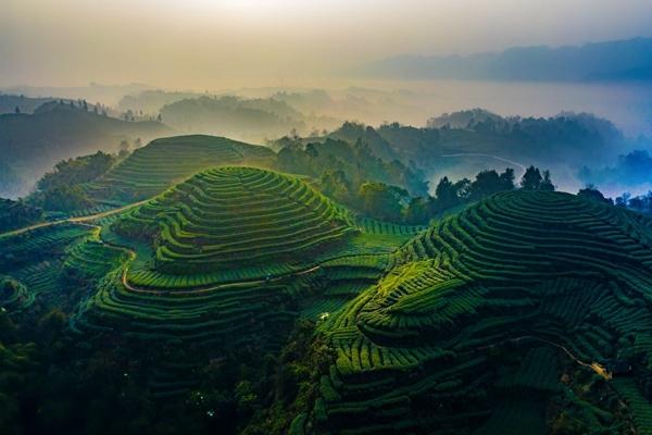 """俯瞰名山茶园呈现奇特的""""大地指纹"""",精美壮观!"""